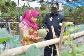HSS Regent and Deputy harvest melon in the PKK's orchard