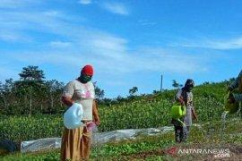 Lima kelompok tani di Jambi siap terima program perhutanan sosial
