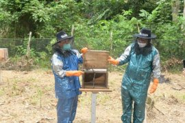 Batanghari gandeng Unja berikan pelatihan budidaya lebah madu