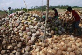 House urges ministry to issue regulation banning whole coconut exports