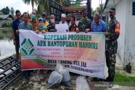 Lima kelompok di Madina dapat bantuan bibit ikan