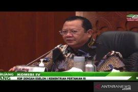 Bahan baku kurang, DPR minta Kementan atur larangan ekspor kelapa