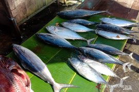 Harga berbagai jenis ikan segar di pasar Ambon turun