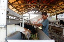 ADARO dampingi pertenakan kambing di Pesantren melalui PASS