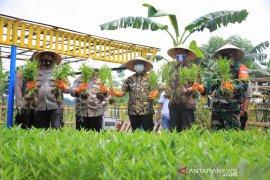 10 hektare lahan tidur Tangerang dimanfaatkan jadi ketahanan pangan