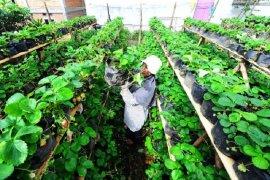 Pemannfaatan BST  untuk usaha pertanian