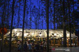 Menikmati seduhan kopi di hutan jati