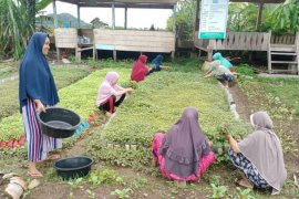 Tetap produktif ditengah pandemi, Ibu-ibu di Aceh Jaya tanam sayur untuk bantu ekonomi keluarga