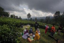 Perlunya upaya mengangkat lagi teh Indonesia