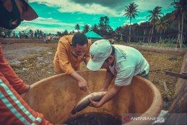 Menjaga ketahanan pangan, Wali Kota Padangsidimpuan panen ikan