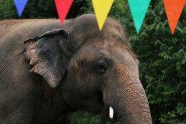 Cher pergi ke Pakistan selamatkan gajah