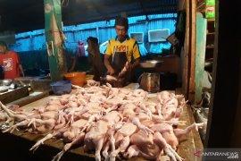 Rendahnya ketersedian DOC broiler dorong kanaikan ayam daging di Kalbar