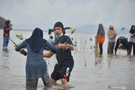 KKPl bangun pembibitan mangrove di Pasuruan