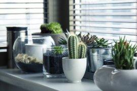 Sekedar taruh tanaman di dalam rumah sudah bermanfaat untuk Anda