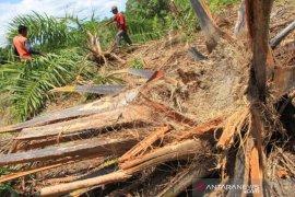 Hingga November 2020, BKSDA catat 95 kasus konflik gajah terjadi di Aceh