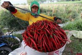 Kementan: bisnis komoditas hortikultura menjanjikan