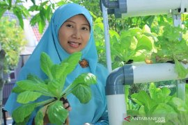 Berkebun urban organik sembuhkan Bumi
