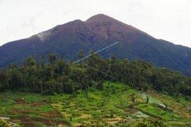 Perladangan ilegal di Taman Nasional Kerinci Seblat