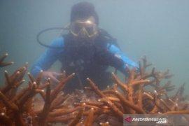 Pemprov Babel-PT Timah perbanyak destinasi wisata bawah laut perairan Pulau Bangka