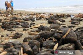 Tumpahan batu bara di pesisir Aceh Barat jadi sorotan