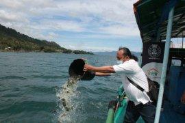 Seratus ribu benih nila ditabur di Danau Toba