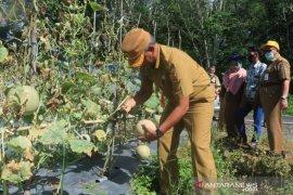 Sekda Banjarbaru semangati petani milenial di Cempaka