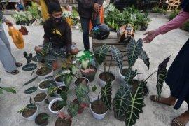 Pasar khusus tanaman hias di Palu