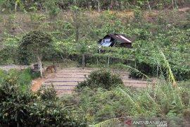 Ketika harimau sumatera bertandang ke rumah warga Solok