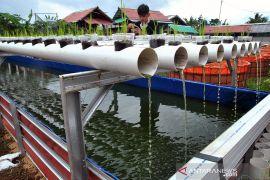 Budidaya lele dengan sistem bioflok dan aquaponik