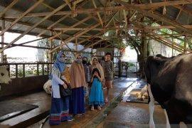 Tim Faterna Unand bantu pengembangan usaha sapi perah di Padang