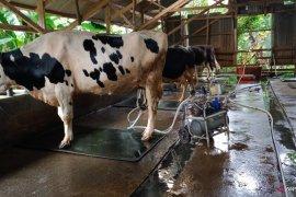 Tim PKM Unand bantu tanggulangi gangguan reproduksi sapi perah