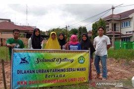 """Mahasiswa KKN UNRI tanam serai wangi dengan konsep """"Urban Farming"""" di Tangkerang Selatan"""