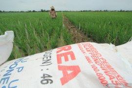 Legislator sebut naiknya HET pupuk tingkatkan biaya  produksi petani