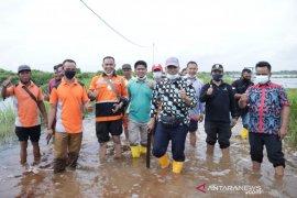 Ratusan rumah dan sawah di Teluk Lanus Siak terendam banjir