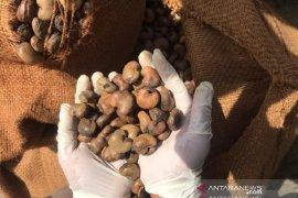 Buton Utara berhasil ekspor produk pertanian ke tiga negara