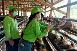 Distan Gumas berikan vaksin kepada ayam petelur milik poktan ternak