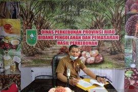 Harga sawit Riau naik dipicu naiknya harga minyak sawit mentah Malaysia