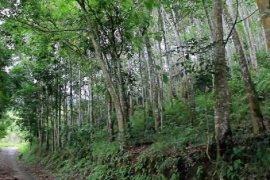 Menjaga dan memelihara hutan dengan pemanfaatan yang berkelanjutan