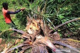 Gajah hancurkan kebun dan rumah warga translok di Nagan Raya Aceh