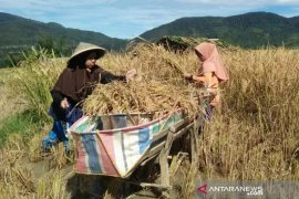BPTP Sumbar nilai BPP berperan penting dalam pembangunan pertanian