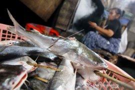 Harga Ikan Asap Naik Akibat Pasokan Menurun