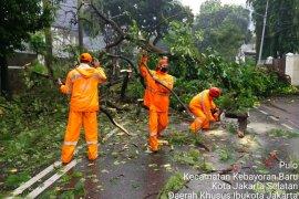 Jakarta Selatan dirikan posko antisipasi pohon tumbang saat musim hujan