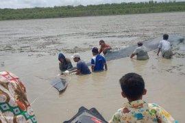 Nelayan dan tim gabungan  selamatkan ikan paus terdampar