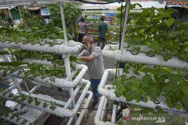 Sudin KPKP optimalkan 50 lokasi pertanian kota untuk ketahanan pangan