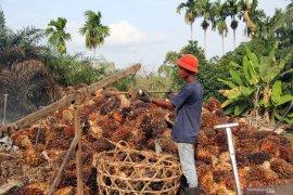 "Akademisi: Label \""no palm oil\"" bagian  kampanye hitam sawit"