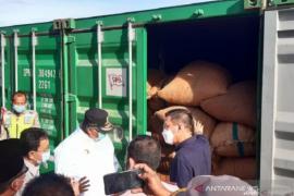 Menarik dolar melalui biji mete Sulawesi Tenggara