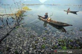 15 Ton Ikan Keramba Jaring Apung Mati Di Danau Maninjau    Page 2 Small