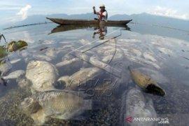 15 Ton Ikan Keramba Jaring Apung Mati Di Danau Maninjau    Page 1 Small
