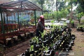 Mengolah pekarangan rumah untuk tanaman pangan berkelanjutan saat pandemi COVID-19