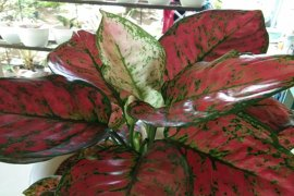 Lampung ekspor tanaman hias ke sembilan negara